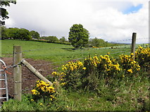 H5672 : Mullaghslin Glebe by Kenneth  Allen