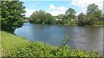 J3472 : River Lagan by David Martin