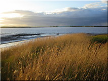 TA0623 : Barrow Haven and the Humber by Jonathan Thacker