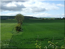 NZ3243 : Hedgerow and fields, Hallgarth by JThomas