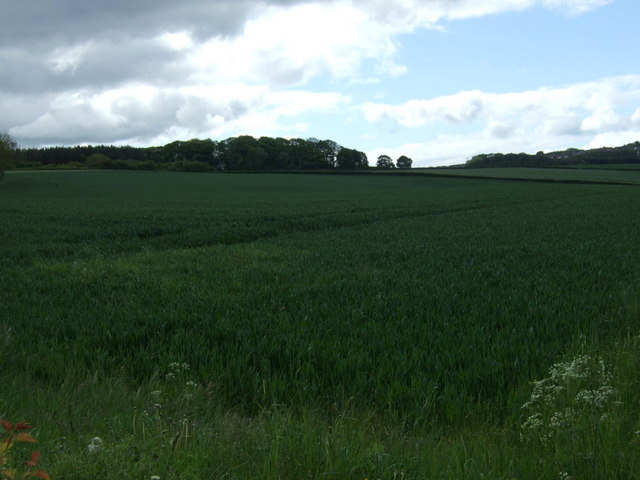 Crop field off Coalford Lane
