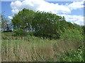 NZ3248 : Woodland, Rainton Meadows Nature Reserve by JThomas