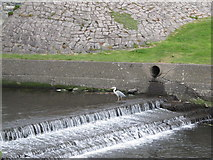 J3731 : The lowest weir on the Shimna by Eric Jones