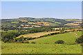 SX0954 : Fields near Castledore by Wayland Smith