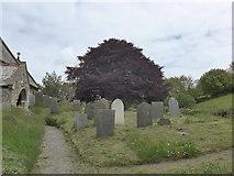 SS6243 : St Thomas, Kentisbury: churchyard (a) by Basher Eyre