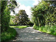 TM0949 : The road divides at Nettlestead by Adrian S Pye
