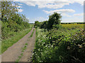 TL3843 : Byway from Melbourn by Hugh Venables