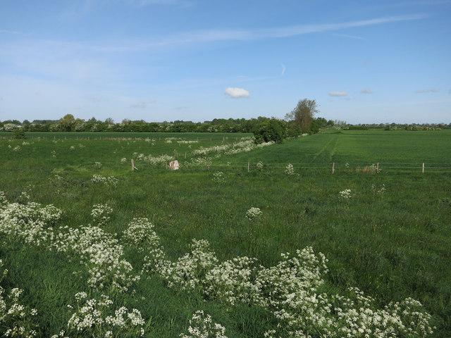 Arable land by the River Cam