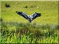 SD7807 : Heron Landing by David Dixon