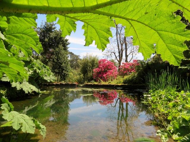 Pond  in  the  garden  Coleton  Fishacre