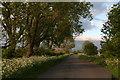 SE8828 : Sunny evening on Common Road, near Broomfleet by Chris