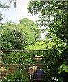 ST5262 : Sheep near Butcombe by Derek Harper
