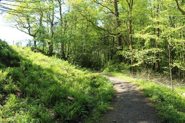 River Ayr Way in Coronation Wood