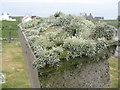 NL9841 : Lichens on a gravestone by M J Richardson