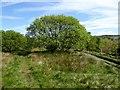 SD6612 : Broad leaf tree on the edge of moorland by Philip Platt