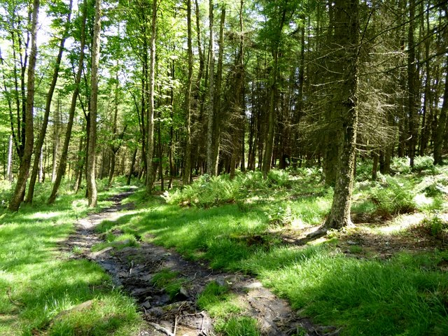 Walker Fold Wood