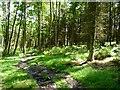 SD6612 : Walker Fold Wood by Philip Platt