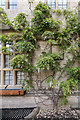 SP5106 : White Wisteria, Brasenose College, Oxford by Christine Matthews