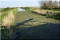 TL5267 : Sludge at the end of Swaffham Bulbeck Lode by Bill Boaden
