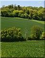 SU7390 : Farmland, Turville, Buckinghamshire by Oswald Bertram