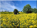 NZ1705 : Public Footpath through Field of Rapeseed by Mick Garratt