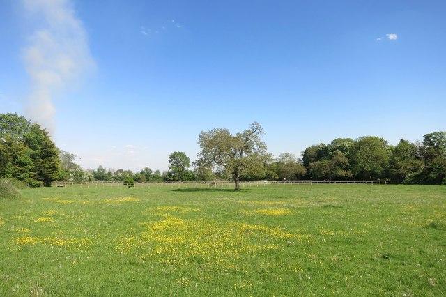 Buttercup Meadow, Dorney
