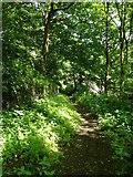 SE0722 : Dye House Lane (8), Norland by Humphrey Bolton