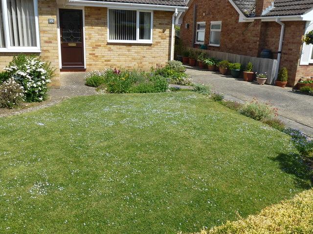 Speedwell Lawn