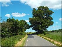 TQ6596 : Rural road near Billericay by Malc McDonald