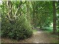 TL6101 : Path through Fryerning Wood by Malc McDonald