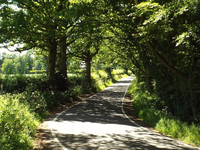 Sunlight and shadows, Hay Green Lane near Wyatt's Green by Malc McDonald