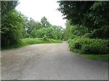 SO6302 : Leafy lane by Gill