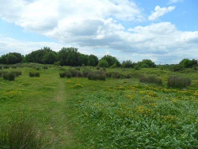 Open grassland