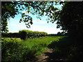TQ5199 : Rural landscape near Stanford Rivers by Malc McDonald