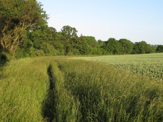 Footpath alongside wheat field boundary, Wakes Colne