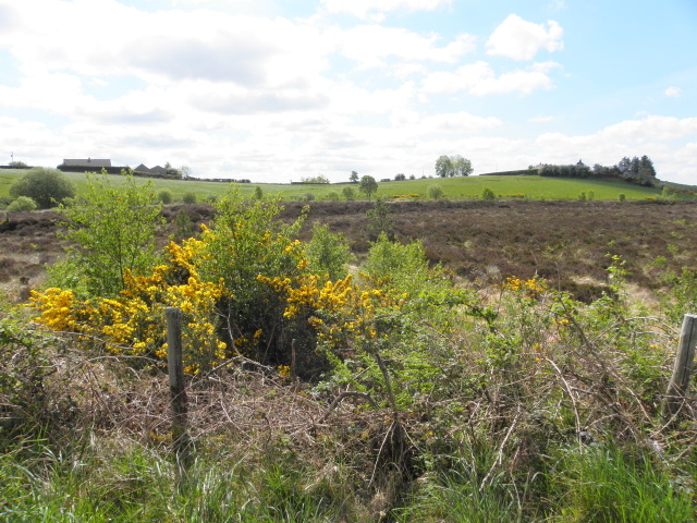 Bogland, Streefe Glebe