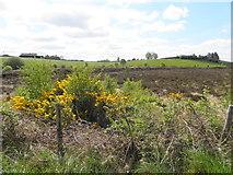 H5575 : Bogland, Streefe Glebe by Kenneth  Allen