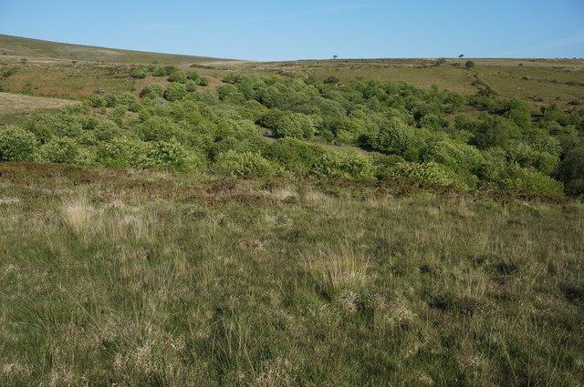 Mixed woodland, Venford Reservoir