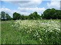 TQ4457 : Scene along a footpath near Cudham Grange by Marathon