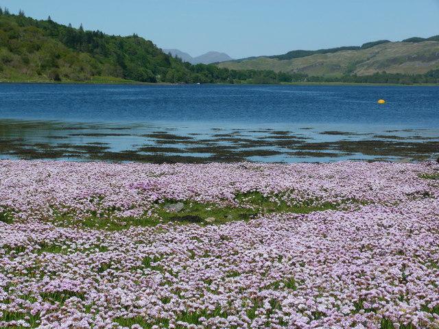 Loch Feochan, near Knipoch