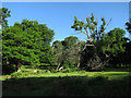 SU2208 : Bratley Wood by Hugh Venables
