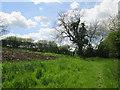 SE7758 : Field  edge  footpath  on  Chalkland  Way (2) by Martin Dawes