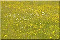 SO8842 : Buttercups and ox-eye daisies by Philip Halling