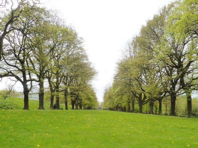 The Avenue at Gibside  showing George Bowes  Palladian style chapel at the far end