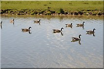 SO8843 : Canada geese on Croome River by Philip Halling