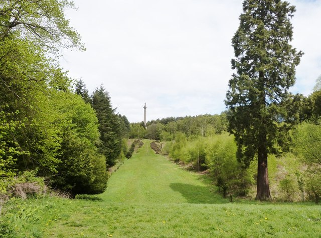 View northwards of the Avenue at Gibside