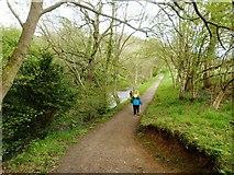 NZ1759 : A stroll along the River Derwent, Gibside Hall Estate by Derek Voller