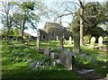 NZ3276 : Bluebells among the graves, Church of Our Lady, Seaton Sluice, Northumberland by Derek Voller