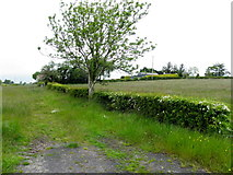 H3262 : Cornamuck Townland by Kenneth  Allen