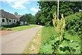 SP7705 : Roadside Rhubarb by Des Blenkinsopp